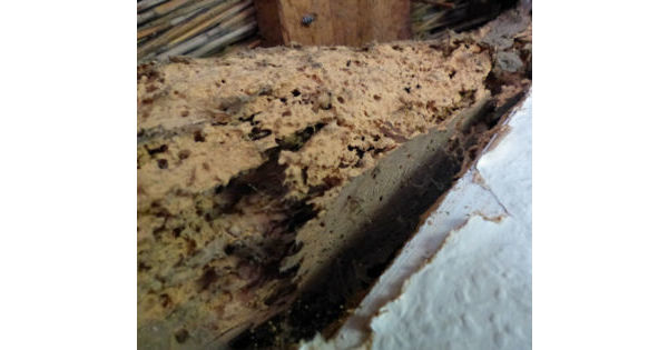 Dry Rot And Woodworm Infestation Solved By Twistfix