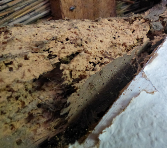Dry Rot And Woodworm Infestation Solved By Twistfix And
